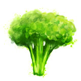 Broccoli on white Stock Photography