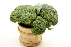 Broccoli in wood receptacle Stock Images