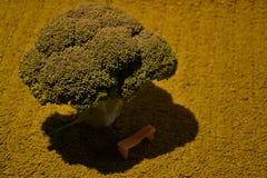 Broccolibegrepp Arkivbild