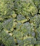 Broccoliflorets Arkivbilder