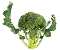 Broccoligrönsak som isoleras på vitbakgrund royaltyfria foton