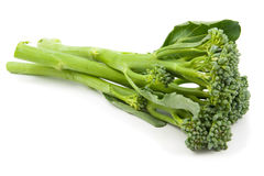 Broccolini被隔绝的婴孩硬花甘蓝 库存照片