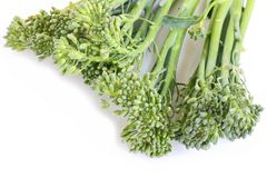 Broccolini Royalty Free Stock Photo