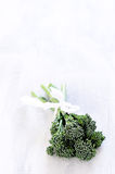 Broccolini on white rustic background Stock Photo