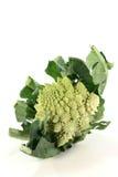 broccoliromanesco Arkivfoton