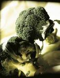 Broccolis Royalty Free Stock Photos