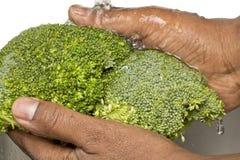 broccolitvätt arkivbild