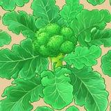 Broccolivektormodell stock illustrationer