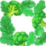 Broccolivektorram royaltyfri illustrationer