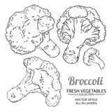 Broccolivektoruppsättning vektor illustrationer