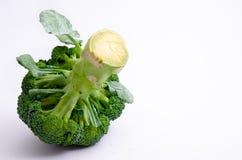 Broccolivitbakgrund royaltyfri bild