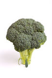 Broccolli. Vibrant green broccolli head isolated against white background Royalty Free Stock Photography