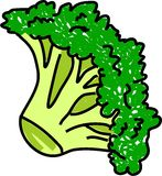 Broccolo illustrazione di stock