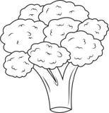 broccolo illustrazione vettoriale
