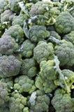Broccolo al servizio del coltivatore Fotografia Stock