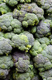 Broccolo calabrese Fotografia Stock