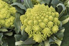Broccolo di Romanesco Fotografie Stock Libere da Diritti