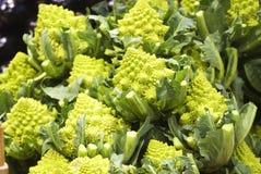 Broccolo di Romanesco Fotografia Stock