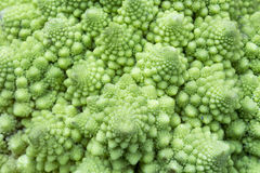 Broccolo di Romanesco Immagine Stock
