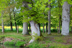 Broceliande Stock Photos