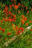Brocha india roja brillante Foto de archivo