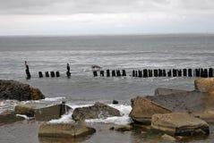 Broche baltique Vue de la mer baltique photos libres de droits