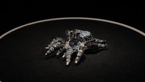 Broche sob a forma de uma aranha em um suporte de gerencio preto Joia superior Macro video estoque