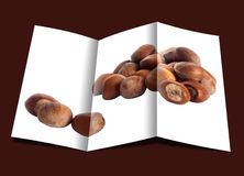 Brochhure of hazelnuts over a white background. Brochure of some hazelnuts placed over a white background stock photography