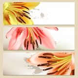 Brochure Set With Vector Lily Stock Photography
