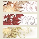 Brochure vector set in floral style with maple leafs Stock Photo