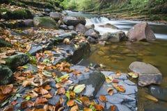 Brock del río imágenes de archivo libres de regalías