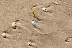Brocken seashells and wet sand beach royalty free stock images