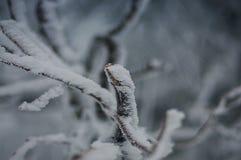 Brocken wycieczkuje w zima krajobrazie Zdjęcie Stock