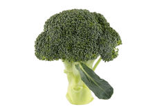 Brocoli. Fresh green brocoli with white background royalty free stock image