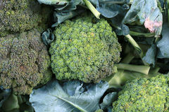 Brocoli Fotografia Stock