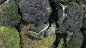 Brocoli. Close up of brocoli plant, organic food, fresh Brocoli in a local market in mexico royalty free stock photos