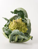 Brocoli de Romanesco Image stock