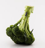 Brocoli and evolution Stock Photography
