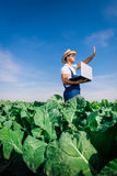 Brocoli frais dans la main d'agriculteur Photographie stock