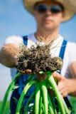 Brocoli frais dans la main d'agriculteur Photos stock