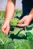 Brocoli frais dans la main d'agriculteur Images libres de droits