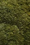 Brocoli Stock Images