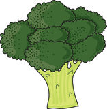 Brocolli Royalty Free Stock Image