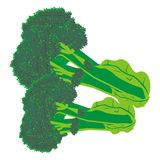 Brocolli illustration Stock Images