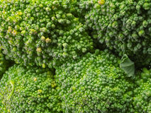 Brocolli Royalty Free Stock Images