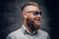 Brodaty mężczyzna w purpurowych okularach przeciwsłonecznych odizolowywających na popielatym winiety bac Obraz Stock