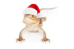 Brodaty smok Jest ubranym Santa kapelusz Fotografia Stock