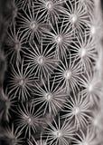 broddad kaktus arkivfoto