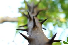 Broddar grön trädtextur royaltyfria foton