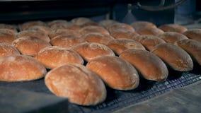 Broden die van brood zich op een transportband de bewegen, sluiten omhoog stock video